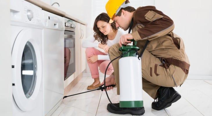 Як позбутися від рудих мурах в квартирі або будинку