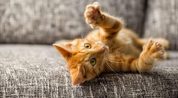Як позбутися від запаху котячої сечі в квартирі