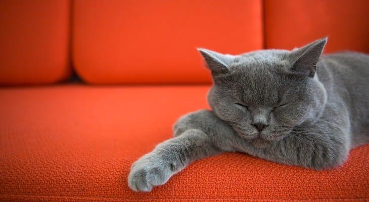 Як вивести запах котячої сечі з дивана