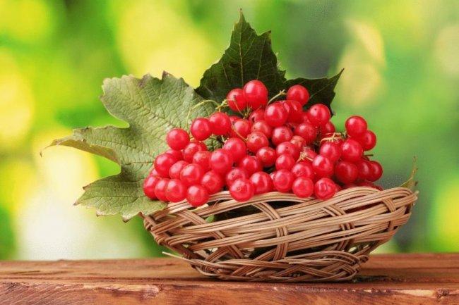 Як зберегти калину на зиму в домашніх умовах і як зберігати ягоди калини без цукру в холодильнику